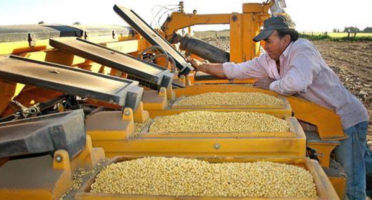 Resultado de imagen para semilla de soja en la sembradora
