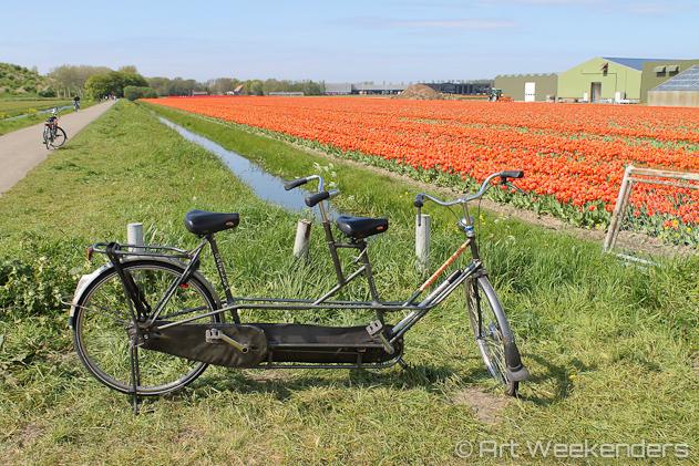 The-Netherlands-Lisse-Keukenhof-Gardens-Tulip-Fields-Biking-Tandem