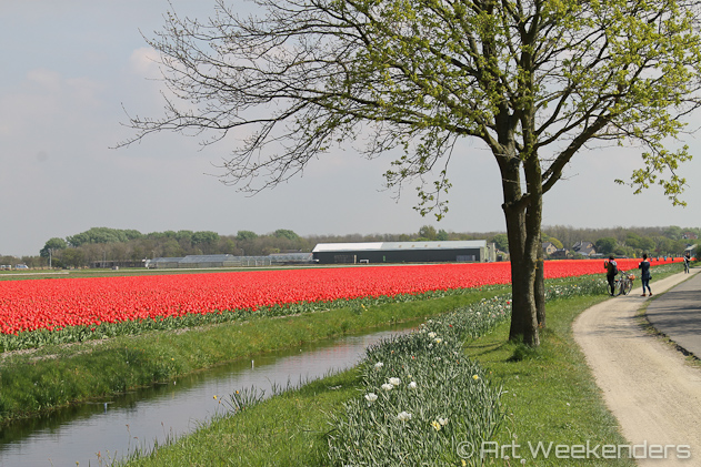 The-Netherlands-Lisse-Tulip-Fields-Keukenhof-Gardens-Biking