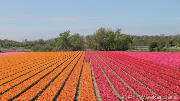 The-Netherlands-Lisse-Tulip-Fields-Keukenhof-Gardens.