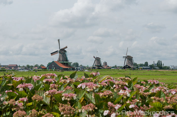 Image result for picture of dutch art