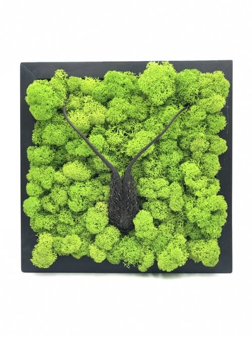 Wall Garden - Finland Reindeer Moss with flower devil's claw Wall Art Frame Decoration