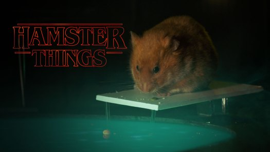 Hamster Things by Keith Hopkin