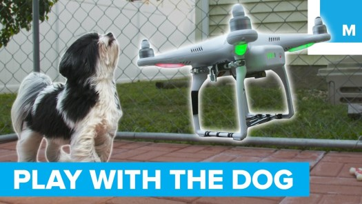 A drone that plays with your dog