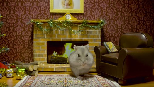 Hamster Yule Log by Keith Hopkin