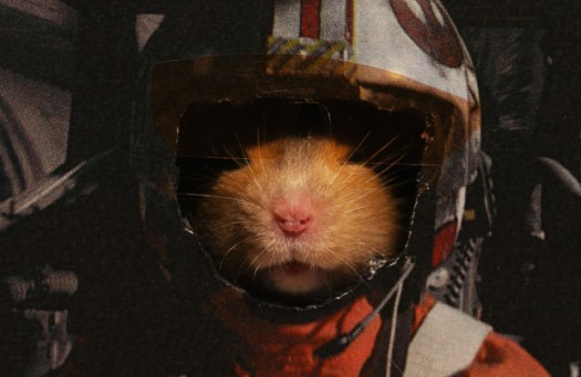 Hamster Skywalker from Hamster Wars by Keith Hopkin
