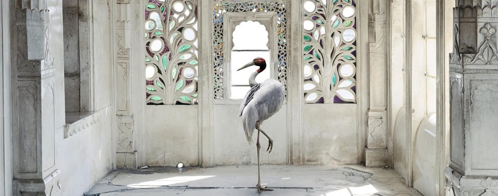 Stork in palace