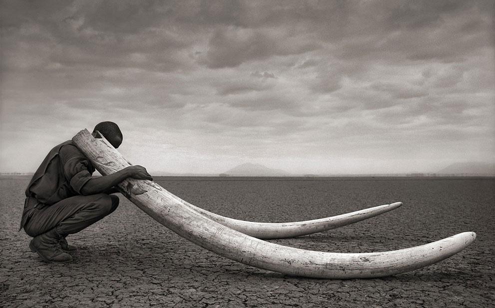 ranger-with-tusks-o-elephant-nickbrandt