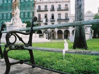 Néle Azevedo - Minimum Monument