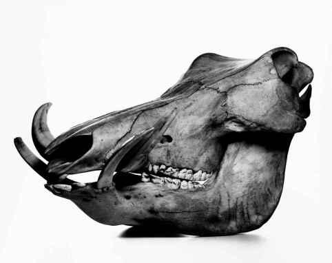 Irving Penn - Cranium Architettura