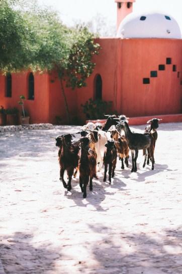 Trade CXXXIV | Essaouira | Riad Baoussala
