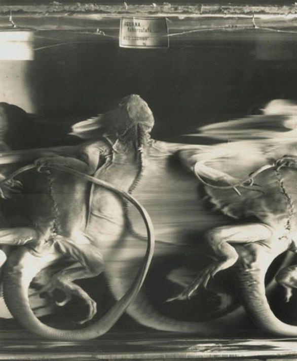 Formol's band (1986) - Patrick Bailly-Maître-Grand