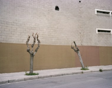 Brother Trees - Athens I hear you ©Georges Salameh