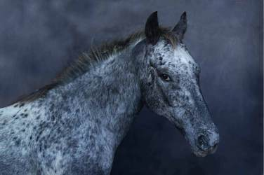 ANIMAL KINGDOM - image courtesy of Ottavia Poli
