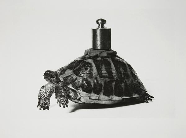 Claudio Abate, 1943, senza titolo_Io non amo la natura di Vettor Pisani, 1970, gelatina bromuro d'argento, Galleria civica di Modena