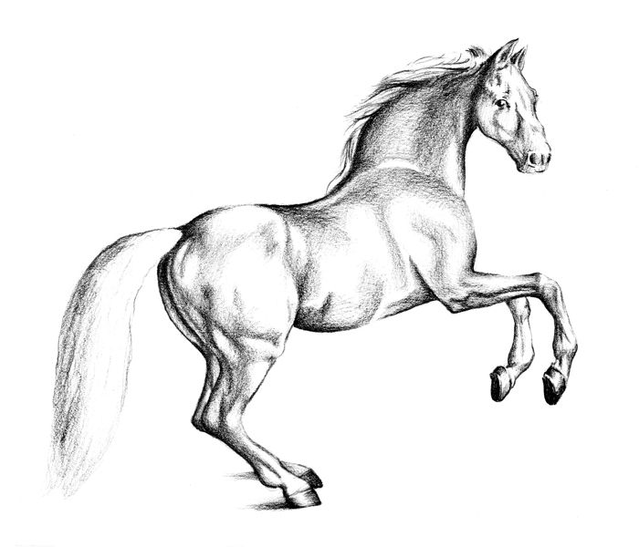 Learn How To Draw Paintings Portraits: HOW TO DRAW A HORSE