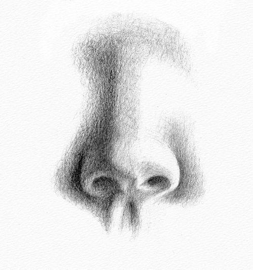 Cara Menggambar Sketsa Hidung