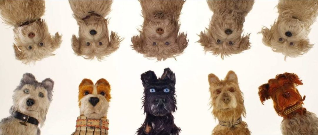 Des chiens au poil
