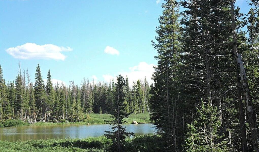 This picture shows a blue sky with a few little clouds floating above a still lake and pine trees. This is a peaceful picture to go with our topic, the peace of God.