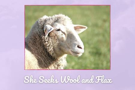 """Picture of sheep labeled """"She seeks wool and flax."""""""
