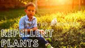What Plants Repel Mosquitoes: 4 Best  Suit to You