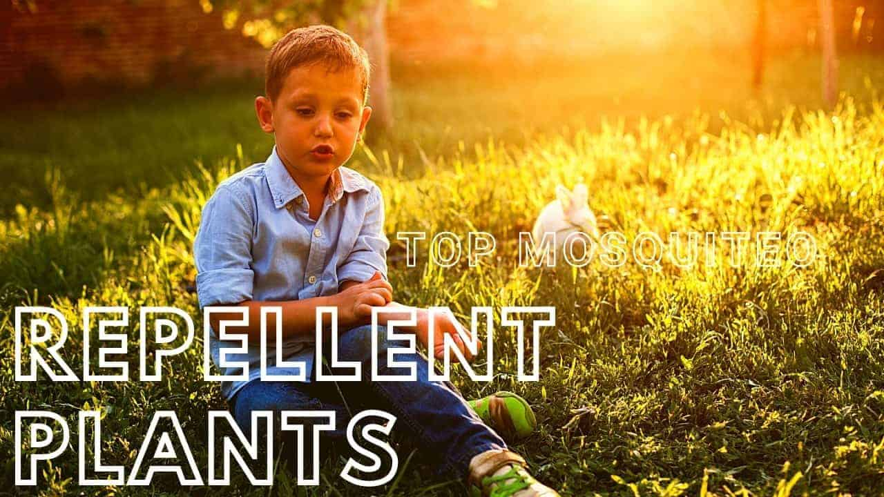 what plants repel mosquitoes