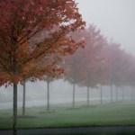 Fall trees and fog