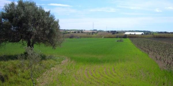 terreno agricolo maccari (7)