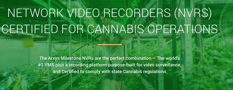 cannabis video surveillance