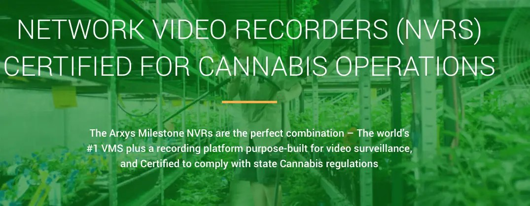 cannabis video surveillance