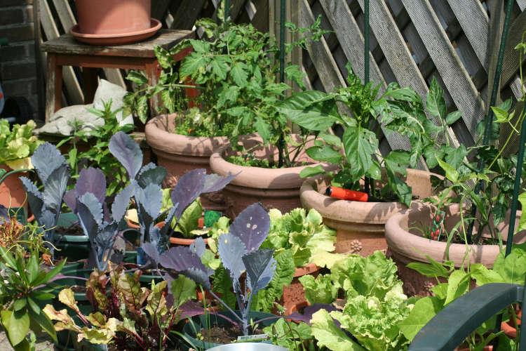 Coaching potager bio intensif sur terrasse - Aude