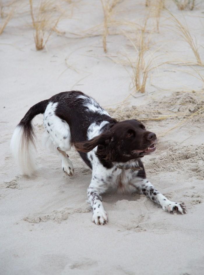 Fotoshooting med hunde