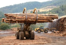 Photo of Study shows overland export of timber from Ghana is a silent canker