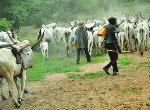 Fulani Herdsmen Grazing Indiscriminately