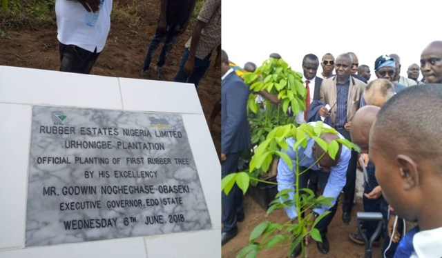 Edo State Governor, Mr. Godwin Obaseki Planting the first rubber tree at the Rubber Estates Nigeria Limited (RENL)'s Urhonigbe Rubber Plantation, in Orhionmwon Local Government Area, Edo State
