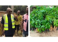 Tree Planting Embarked Upon By Hon Emmanuel Okpemagware Omuvwie In Sapele