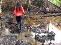 Oil Spilled Water in Delta Riverine Community