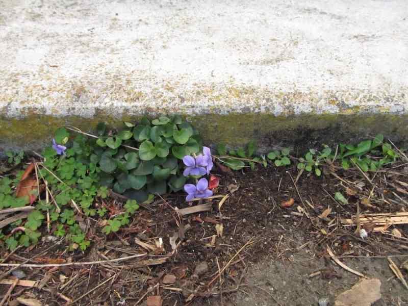 Flower growing below the steps
