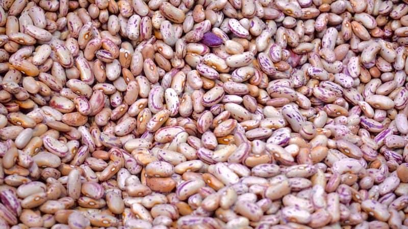 Vegetarian beans