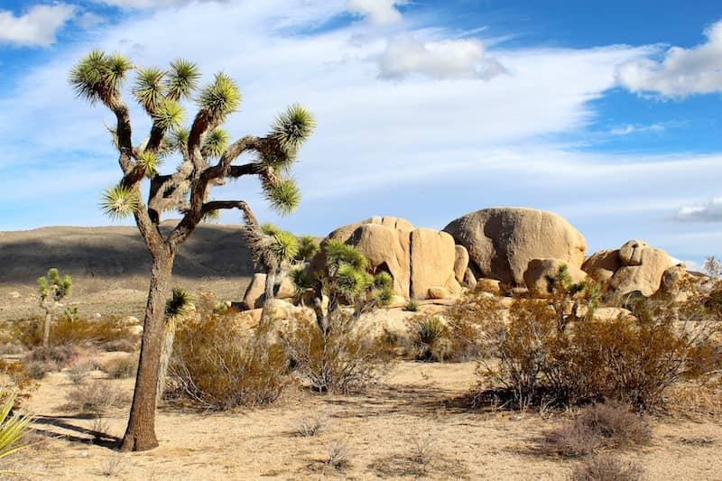 Wake of Vultures desert