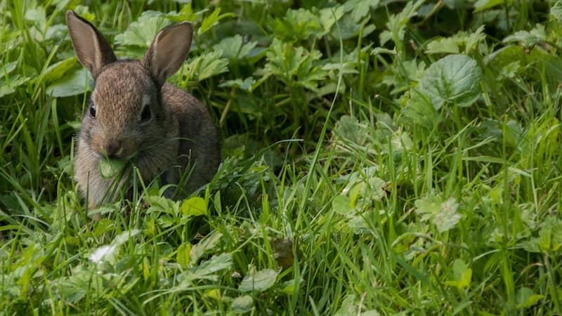 I lost my rabbit