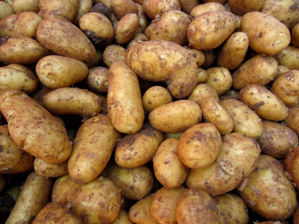 Annabelle potatoes