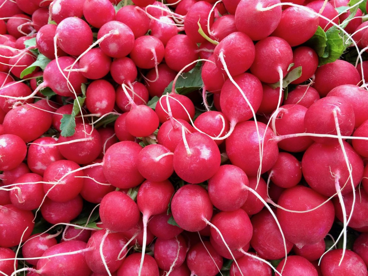 Bunches of round red radishes