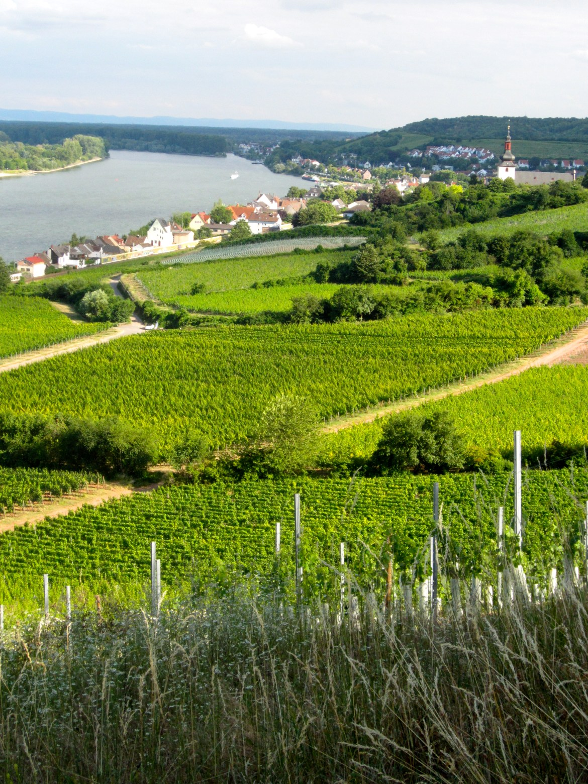 View of Nierstein am Rhein