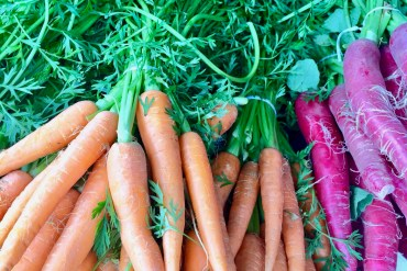 Bunches of fresh orange and purple carrots
