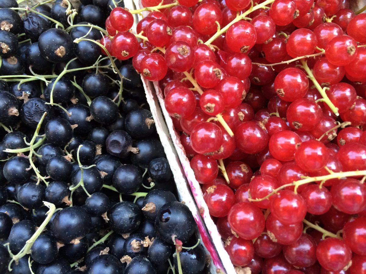 Rote Grütze: summer berry compote with vanilla custard (recipe)
