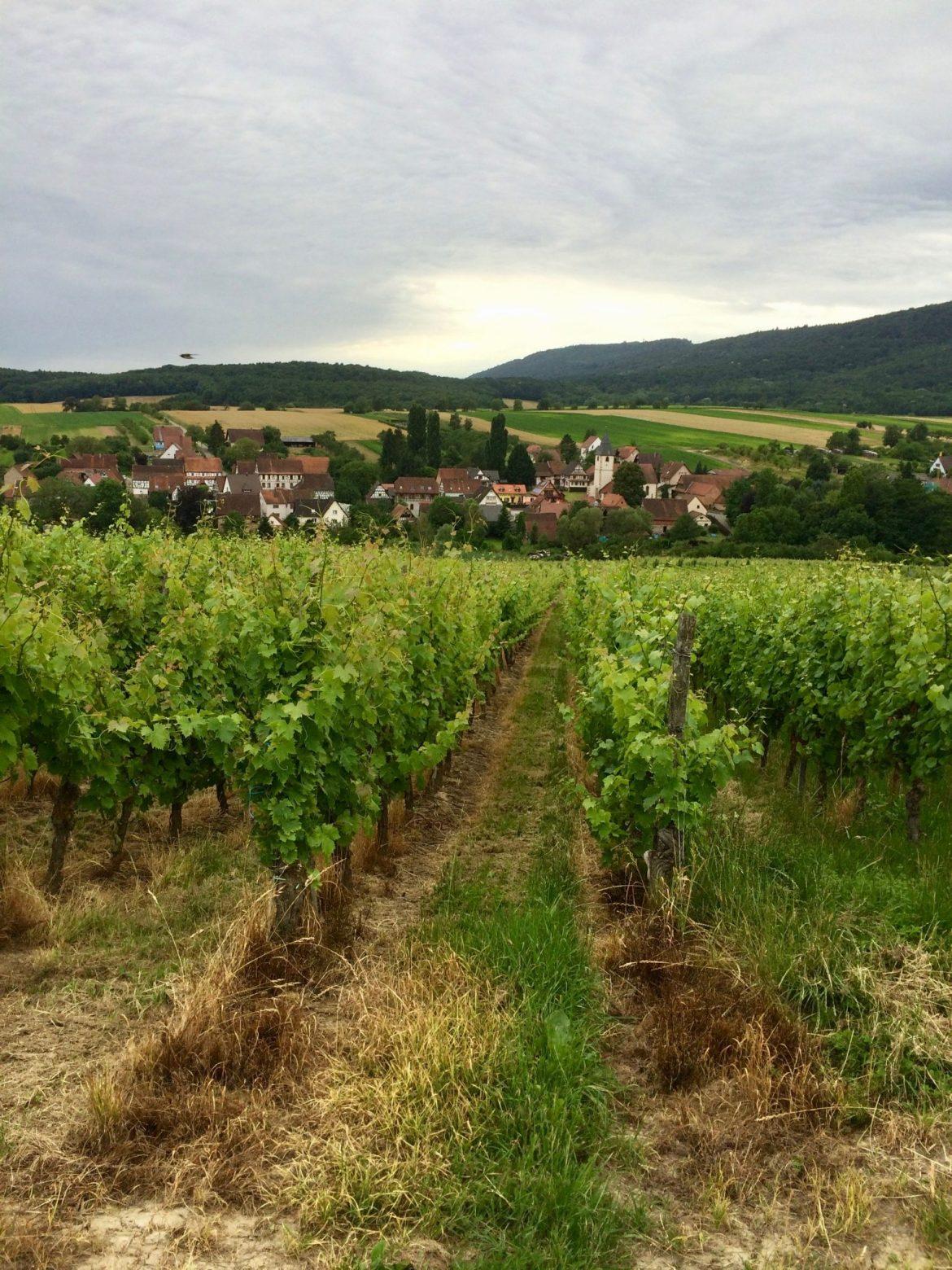 Vineyards in Alsace