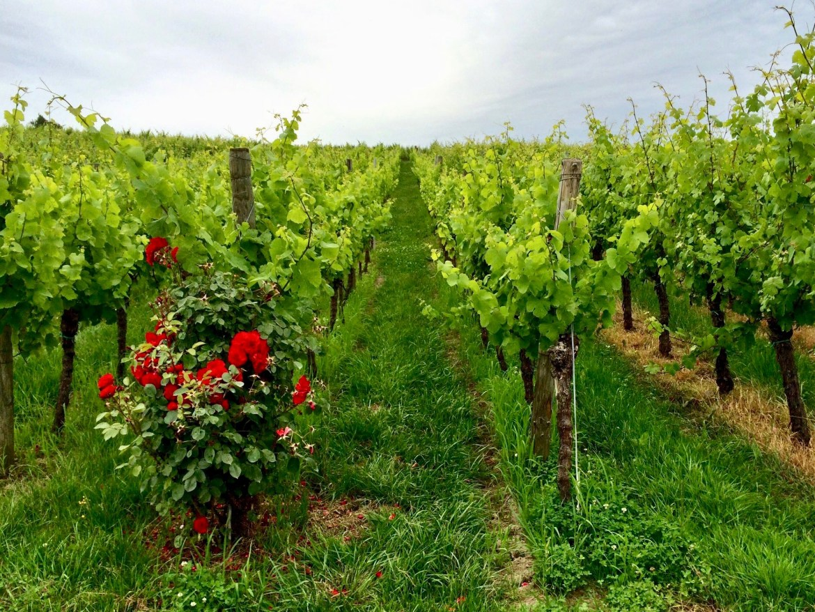 Vineyards in Cleebourg Alsace