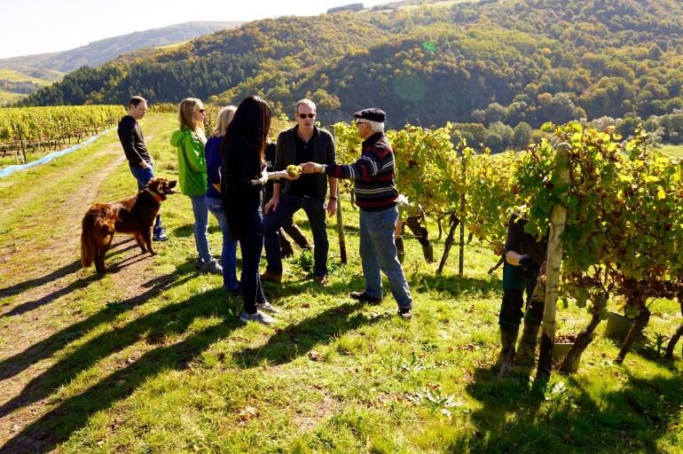 A group wine tasting tour of vineyards in the Nahe region in German