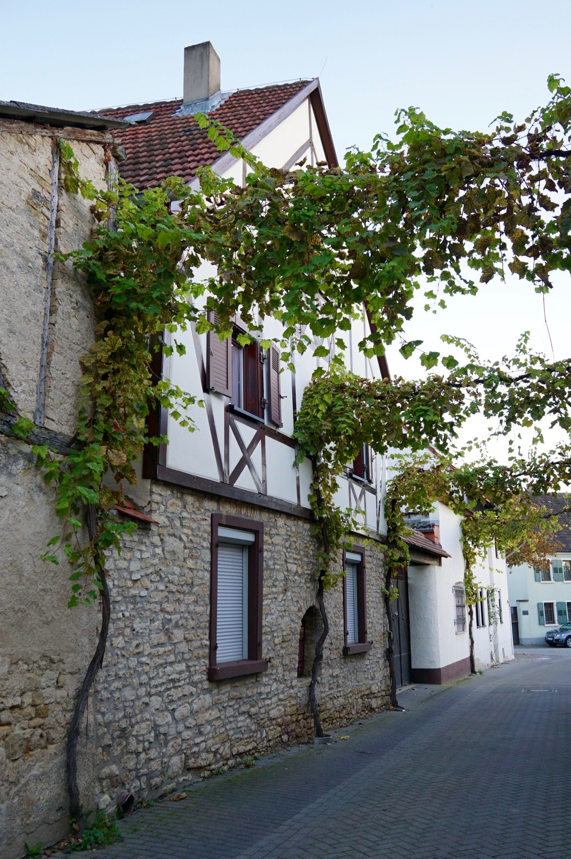 A street of half-timbered houses and hanging vines in Ingelheim-am-Rhein